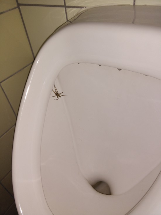 spinne_pissoir